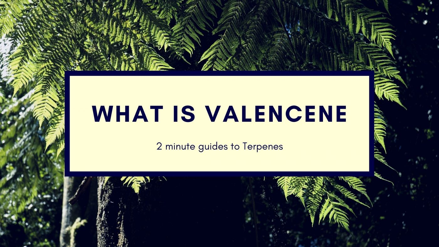 Valencene Guide to it's benefits